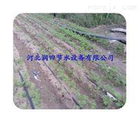溆浦县滴灌厂家发货及时 湖南滴灌带准确灌溉