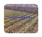 多种蔬菜滴灌设备 河南滴灌管价格 16mmPE管