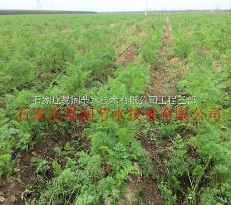 平陆县土豆内镶滴灌带|值得信赖的易润老品牌