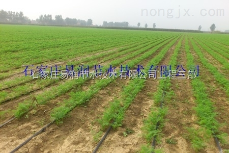 新县滴灌厂家、促销PE滴灌带产品