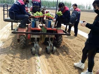 2ZBX-2-宁津县田耐尔蔬菜苗栽植机 移栽机 栽苗机 移苗机