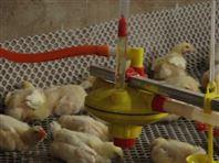 加强智能畜牧设备养殖供水线设备,给水设备