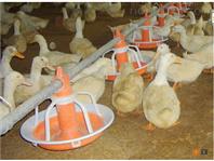 机械喂养设备 智能养殖设备喂养专用饲养料盘