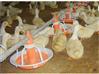 山东机械禽用喂料饲料设备,养殖开食盘设备