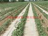 乌达大田节水滴灌-优质扁平滴灌带价格